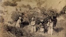 아펜젤러 선교사가 촬영한 시골의 나뭇짐 지게를 진 소년들